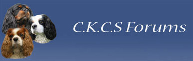 CKCS Forums - Powered by vBulletin